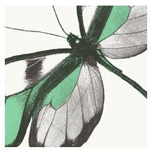 Duni Servietten 3lagig Tissue Motiv Papillon, 33 x 33 cm, 20 Stück