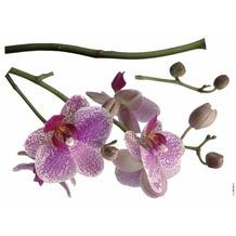 Komar Decosticker Orchidee 100 x 70 cm