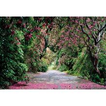 Komar Fototapete Wicklow Park 254 x 368 cm