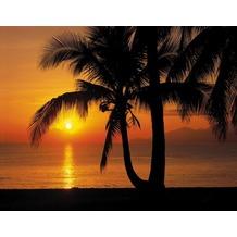 Komar Fototapete Palmy Beach Sunrise 368 x 254 cm