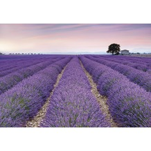 Komar Vlies Fototapete Provence