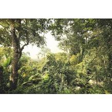 Komar Vlies Fototapete Dschungel