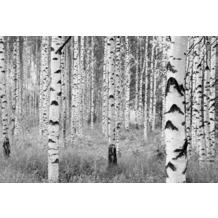 Komar Vlies Fototapete Woods