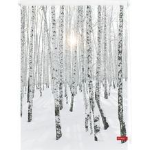 Lichtblick Rollo Klemmfix, ohne Bohren, blickdicht, Birkenwald - Weiß  Bunt Breite: 100 cm