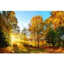 XXLwallpaper Fototapete Autumn Forest 1 SK-Folie 2,00 m x 1,33 m
