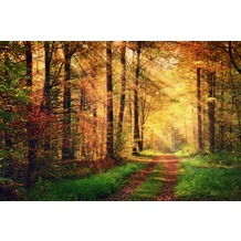 XXLwallpaper Fototapete Autumn Forest 2 SK-Folie 2,00 m x 1,33 m