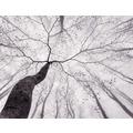AS Création Fototapete Baumkrone 130 g Vlies grau hellgrau 403712 3,36 m x 2,60 m