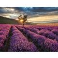 AS Création Fototapete Lavendelfeld 130 g Vlies violett mehrfarbig 403701 3,36 m x 2,60 m