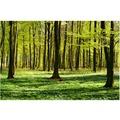 Bilderwelten Vliestapete - Waldwiese - Fototapete Breit 190x288cm