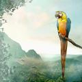 Duni Servietten Tissue Parrot 33 x 33 cm 20 Stück