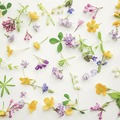 Duni Tissue Servietten Scattered flowers 25 x 25 cm 20 Stück