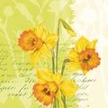 Duni Tissue Servietten Spring Flowers 33 x 33 cm 20 Stück