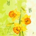 Duni Zelltuch Servietten Spring Flowers 40x40 cm 3lagig, 1/4 Falz 250 Stück
