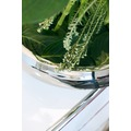 fleur ami LUCIDO Edelstahlschale, 40/11 cm, poliert