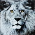 Kare Design Glasbild Löwe 80x80 cm
