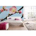 Komar Vlies Fototapete munich design book - Peach Blossom 350 x 250 cm