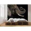 Komar National Geographic African Elephant 300 x 280 cm