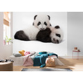 Komar National Geographic Giant Panda 300 x 280 cm