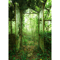 "Komar Stefan Hefele / Lost Places Vlies Fototapete ""Greenhouse"" 200 x 280 cm"