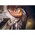 """Komar Stefan Hefele / Lost Places Vlies Fototapete """"Oak Spiral"""" 400 x 280 cm"""
