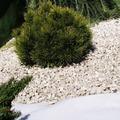 NOOR Unkrautfolie Unkrautblocker weiß 105 g/m² 0,9x10m