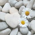 Paper+Design Servietten Tissue Daisies on stones 33 x 33 cm 20er