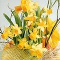 Paper+Design Tissue Servietten Daffodil Blossoms 33 x 33 cm 20 Stück