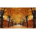 papermoon Fototapete Autumn Alley 7 Bahnen 350 x 260 cm Vlies