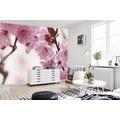 papermoon Fototapete 7 Bahnen, Digitaldruck Peach Blossom, Tapetenbahn 50cm, Spezial Tapetenpapier, BlueBack 350 x 260 cm