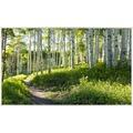 papermoon INFRAROT BILDHEIZUNG 600W, 60X100cm, Birken Wald Infrarotheizung
