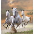 papermoon Fototapete White Stallions in Dust 7 Bahnen 350 x 260 cm Vlies
