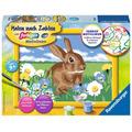 Ravensburger Malen nach Zahlen - Süßes Kaninchen