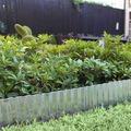Siena Garden Rasenkante metall verzinkt 6m x 150mm