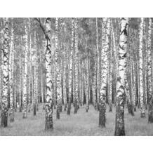 AS Création Fototapete Birkenwald 130 g Vlies weiß schwarz 403706 3,36 m x 2,60 m