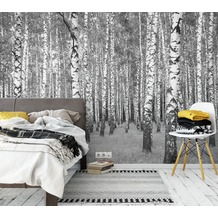 AS Création Fototapete Birkenwald 130 g Vlies weiß schwarz 3,36 m x 2,60 m