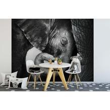AS Création Fototapete Elefantenfamilie 130 g Vlies schwarz weiß 3,36 m x 2,60 m
