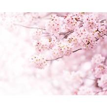 AS Création Fototapete Kirchblüte 130 g Vlies rosa weiß 403713 3,36 m x 2,60 m