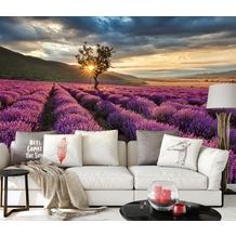 AS Création Fototapete Lavendelfeld 130 g Vlies violett mehrfarbig 3,36 m x 2,60 m