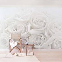 Bilderwelten Vliestapete Premium - Weiße Rosen - Fototapete Breit 190x288cm