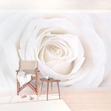 Bilderwelten Vliestapete - Pretty White Rose - Fototapete Breit 190x288cm