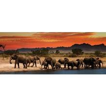 Bönninghoff Glasbild mit Sicherheitsglasoberfläche, Afrika Elefanten