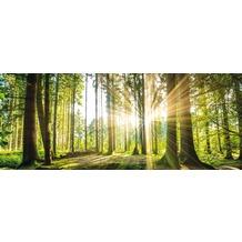 Bönninghoff Glasbild mit Sicherheitsglasoberfläche, grüner Wald