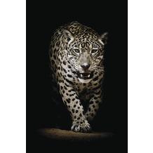 Bönninghoff Glasbild mit Sicherheitsglasoberfläche, Leopard