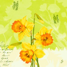 Duni Klassik-Servietten Spring Flowers 40x40 cm 4lagig, geprägt, 1/4 Falz 50 Stück
