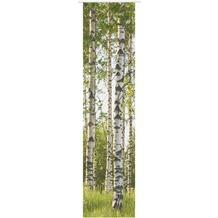 Elbersdrucke Schiebevorhang Birch-Tree grün