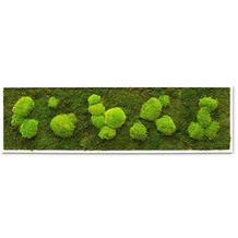fleur ami PREMIUM Moosbild, 140x40 cm, 70% Flachmoos, 30% Ballenmoos, weißer Rahmen
