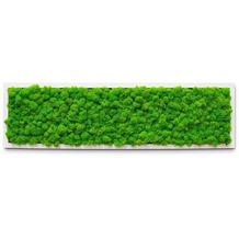 fleur ami PREMIUM Moosbild, 70x20 cm, 100% Islandmoos, weißer Rahmen