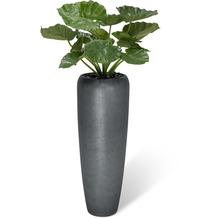 fleur ami SETS BUSINESS, ROYAL , 34/97 cm, titan grau, ALOCASIA CALIDORA 80 cm