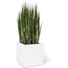 fleur ami SETS ECONOMY, EASY 50x50/50 cm matt-weiß, ZUCKERROHR 122 cm