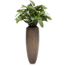 fleur ami SETS PREMIUM, Loft 30/80 cm verigris bronze, CALATHEA Kunstpflanze, 80 cm